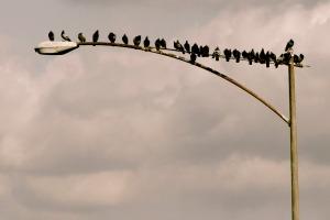 birds on a lamp post
