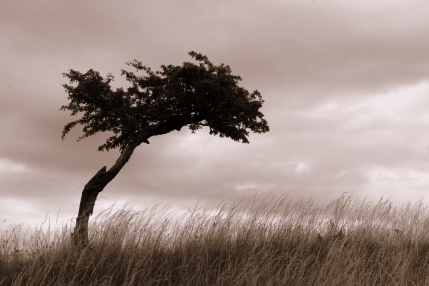 lonely-tree-psychotherapy-counselling-manchester1